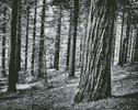 Black and White Forest - Cross Stitch Chart