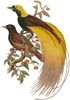 Greater Bird of Paradise - Cross Stitch Chart