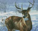 Whitetail Buck (Large) - Cross Stitch Chart